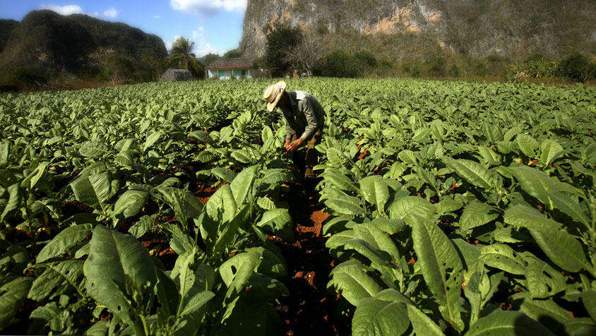 Caja de Extremadura y las nuevas ayudas de la PAC 2015
