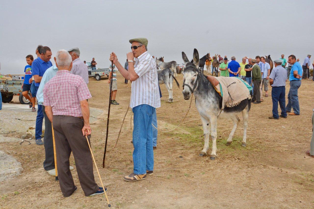 Feria de Septiembre 2014 APyF